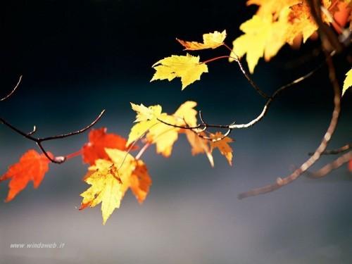 foto_autunno_333.jpg